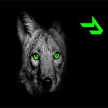 Coyote-Logistics