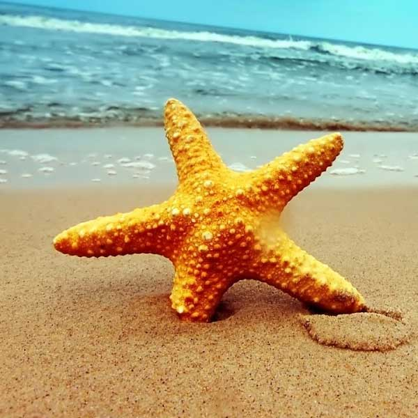 Playa-estrella_md