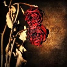 san_valentin_md